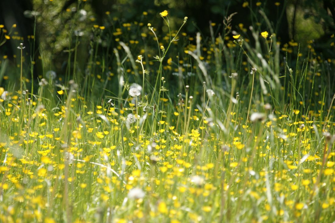 Pollen meadow10 top tips to handle hay fever this spring!
