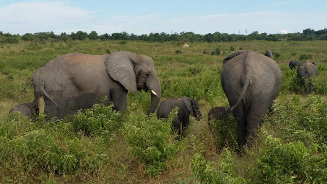 Seven Days of Wonder in Beautiful Botswana